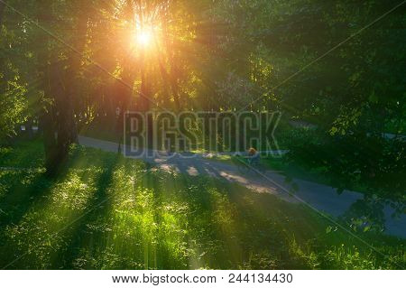 Picturesque Sunny Summer Landscape - Summer Park Alley At Sunset And Unidentified Girl Riding The Bi