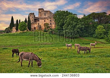 Lourmarin, Provence, France: Landscape At Dawn Of The Countryside With The Ancient Castle And The Gr