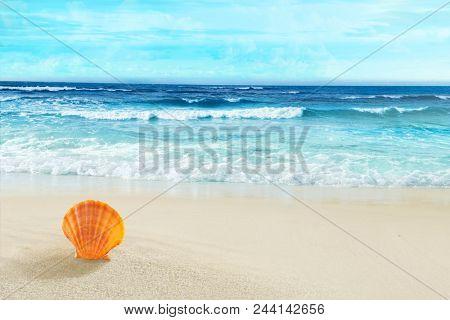 Seashell in the sand. Tropical beach.