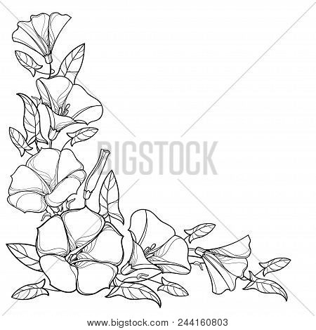 Vector Corner Bouquet With Outline Convolvulus Or Bindweed Flower Bell, Leaf And Bud In Black Isolat