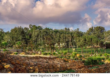 Summer Morning At Montaza Public Park With Dense Trees, Grass, And Partly Cloudy Sky, Alexandria, Eg