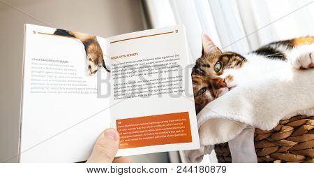 Paris, France - Mar 24, 2018: Man Holding Travel Important Information About Dog, Cats, Ferrets Issu