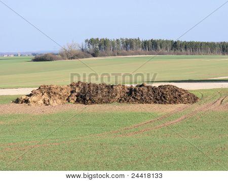 manure in fields