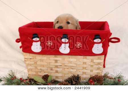 adorable golden retriever puppy peeking out from festive basket poster