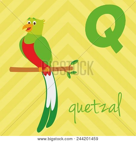 Cute Cartoon Zoo Illustrated Alphabet With Funny Animals. Spanish Alphabet: Q For Quetzal. Learn To