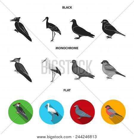 Woodpecker, Stork And Others. Birds Set Collection Icons In Black, Flat, Monochrome Style Vector Sym