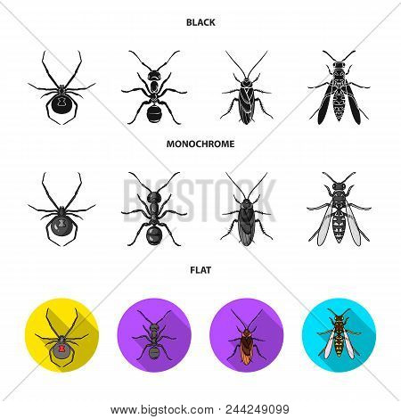 Spider, Ant, Wasp, Bee .insects Set Collection Icons In Black, Flat, Monochrome Style Vector Symbol