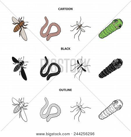 Arthropods Insect Mosquito, Bee.earth Worm, Caterpillar, Vermicular Set Collection Icons In Cartoon,