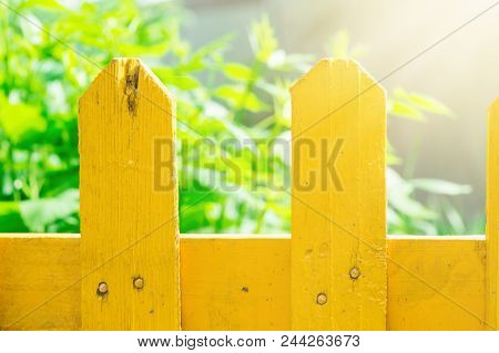 Plank Wooden Painted Yellow Fence Garden Greenery Herbs In Background. Bright Golden Sunlight. Vivid
