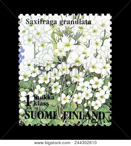 Finland - Circa 1994 : Cancelled Postage Stamp Printed By Finland, That Shows Saxifraga Granulata Fl