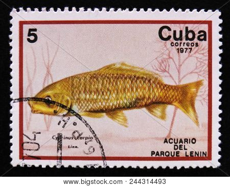 Moscow, Russia - April 2, 2017: A Post Stamp Printed In Cuba Show The Fish With The Inscription Cypr