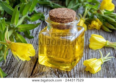 A Bottle Of Evening Primrose Oil And Fresh Blooming Plant