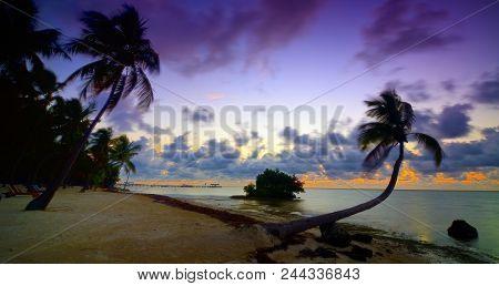 Islamorada Sunrise: Sunrise Over The Atlantic Ocean And A Sandy Beach With Swaying Palm Trees In Isl