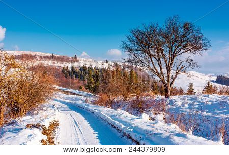 Tree Along The Road Through Snowy Hillside. Lovely Winter Forenoon In Mountains. Spruce Forest In Th