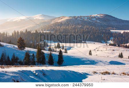 Borzhava Mountain Ridge In Winter. Spruce Forest On Snowy Hillside In Haze. Lovely Landscape Of Carp