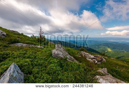 Lovely Nature Scenery On The Grassy Hillside. Small Spruce Tree Among The Rocks On A Cloudy Day