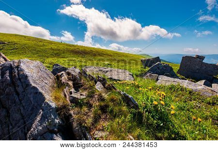 Rocks And Dandelions On The Grassy Hillside. Peak Of Runa Mountain In The Distance. Beautiful Summer