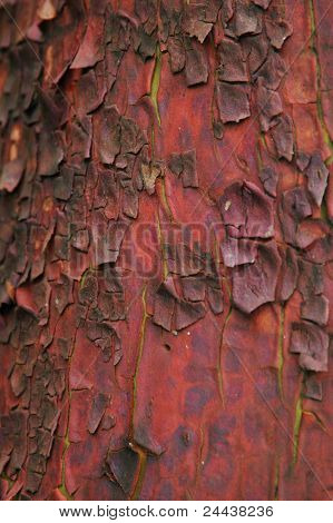 Rough Bark