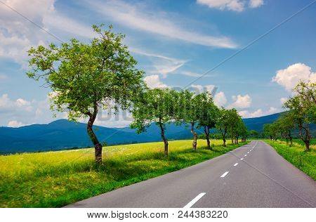 Row Of Trees Along The Country Road In To The Distant Mountains. Beautiful Summer Landscape With Stu