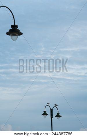 Seagulls Sitting On A Streetlamp In Penzance, Cornwall, Uk