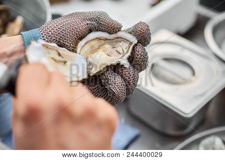 Fresh Oyster Held Open With A Oyster Knife In A Hand With An Oyster Glove The Oyster Opening Backgro