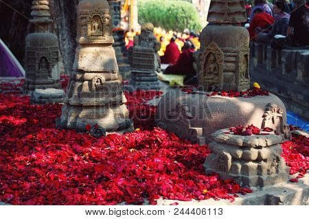 Red Rose-petals For Showing The Reverence Appropriate To A Pilgrimage-place. Numerous Small Rose Pet