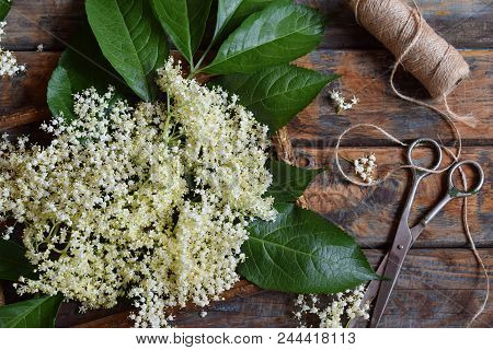 Elderflower Blossom Flower In Wooden Background. Edible Elderberry Flowers Add Flavour And Aroma To