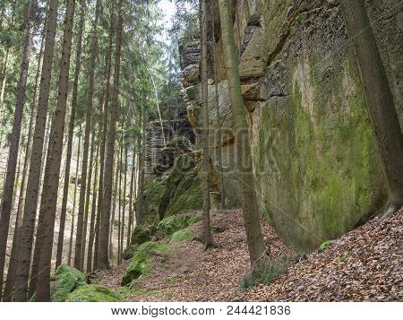 Spruce Tree Forest With Big  Moss Covered Stones And Sandstone Rocks,fallen Leaves, Czech Republic,