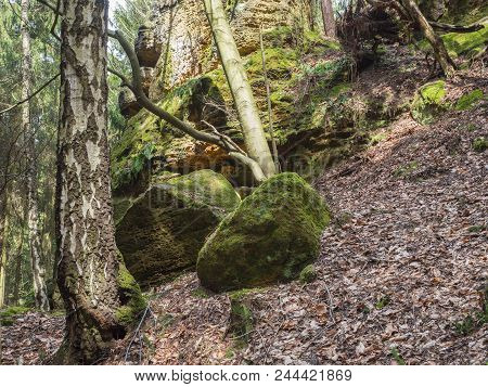 Deciduous Birch And Oak Forest With Big  Moss Covered Stones And Sandstone Rocks, Lush Green Moss An