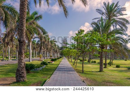 Pedestrian Walkway Framed With Trees And Palm Trees On Both Sides With Partly Cloudy Sky In A Summer