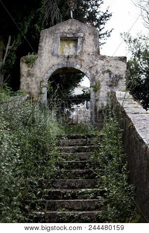 Shrubs And Bushes Growing On The Steps Towards The Entrance Of Old Ruined Monument. The Height Of Tr