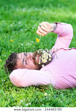 Macho with daisies in beard relaxing. Bearded man with daisy flowers in beard lay on grassplot, grass background. Allergy and antihistamine concept. Man with beard on smiling face sniffs dandelion. poster
