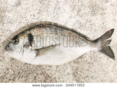 Close-up of gilt-head bream (Sparus aurata) color images stock photos poster
