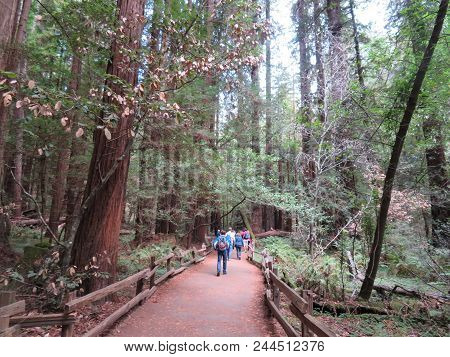 Muir Woods National Monument - 9/18/2017 -tourist Walk Through Giant Redwood Trees At The Muir Woods