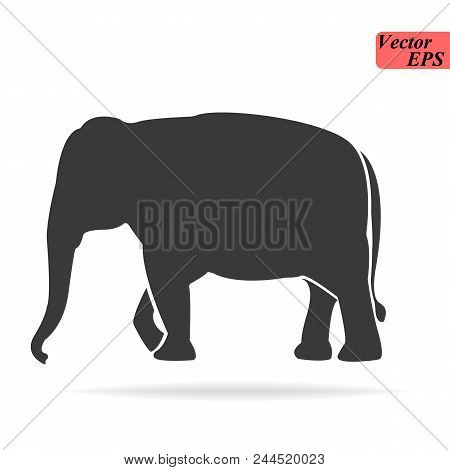 Elephant Large Cartoon Mammal Isolated On White. African Bush Or Forest Elephant And Asian Elephant.