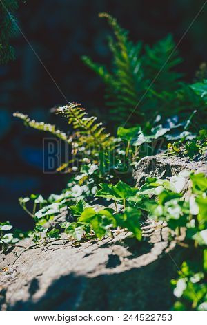 Green Vegetation Shot Outdoor At Shallow Deth Of Field With Forest Ground In The Background