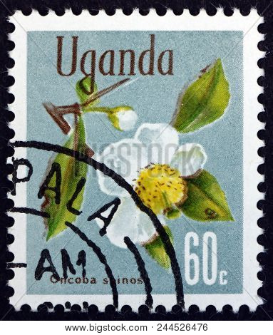 Uganda - Circa 1969: A Stamp Printed In Uganda Shows Snuff-box Tree, Oncoba Spinosa, Is A Small Deci