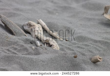 Close Up Image Of Driftwood On Soft Sand With A Shoe Impression Over Top.