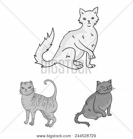 Breeds Of Cats Monochrome Icons In Set Collection For Design. Pet Cat Vector Symbol Stock  Illustrat