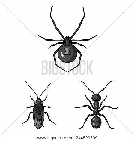 Different Kinds Of Insects Monochrome Icons In Set Collection For Design. Insect Arthropod Vector Sy