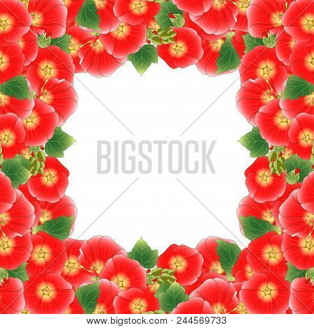 Red Alcea Rosea Border - Hollyhocks, Aoi In The Mallow Family Malvaceae. Isolated On White Backgroun
