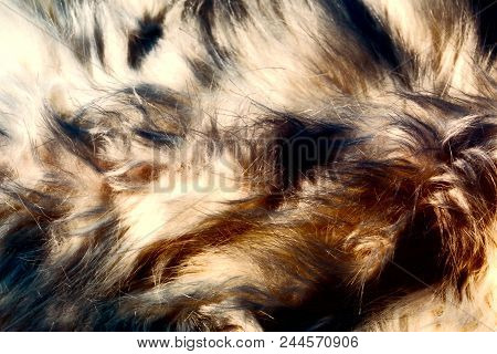 Different Structures And Shades Of Fur - Artificial Fur Texture