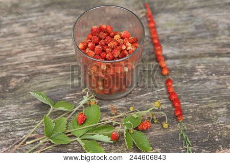 Wild Strawberries Gathered In Glass And On Grass Straw On Wooden Table. Ripe Woodland Strawberries H