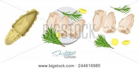 Cuttlefish Seafood Isolated Sketch. Illustration Of A Dish Of Cuttlefish With Lemon And Rosemary On