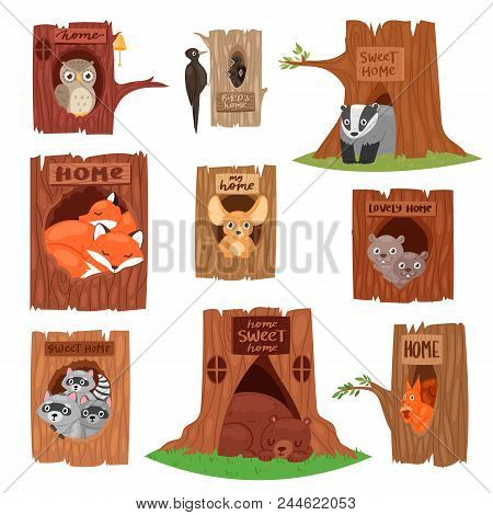Animals In Hollow Vector Animalistic Character In Tree Hollowed Hole Illustration Set Of Birds Owl O