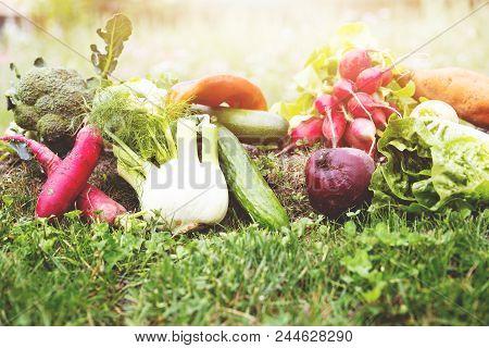 Lot Of Various Organic Vegetables Is Lying In A Flower Meadow, Enough Copyspace