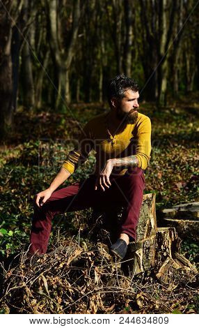 Guy With Beard Sits On Tree Stump In Forest. Loneliness And Autumn Nostalgia Concept. Macho Spends T