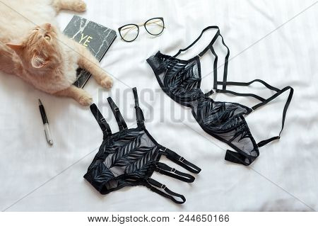 Red Fluffy Cat Sitting On Bed Near Black Lingerie. Set Of Glamorous Stylish Sexy Lace Lingerie With