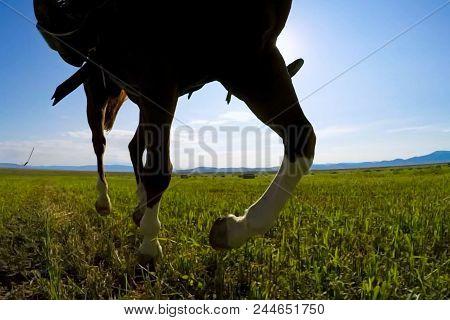 A Running Forward Horses On The Prairies.