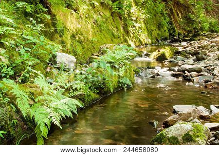 Stream Meanders Through The Woods As It Cascades Over Rocks